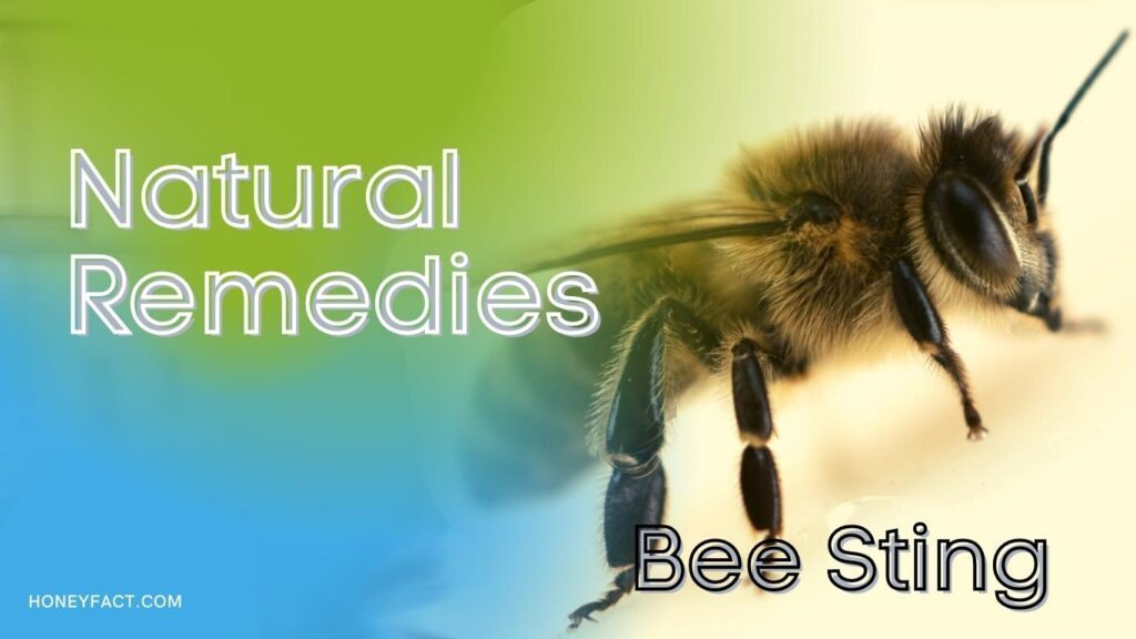 Natural remedies for bee sting