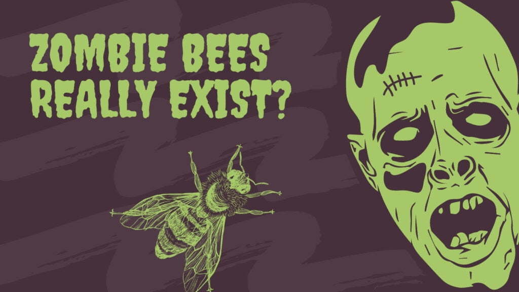 What are Zombie Bees? Do they really exist?